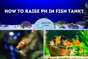 How To Raise pH In Fish Tank
