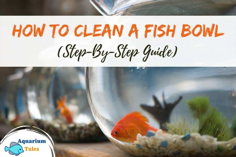 How to Clean A Fish Bowl