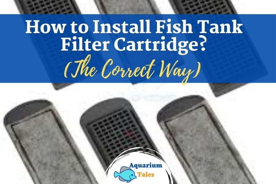How to Install Fish Tank Filter Cartridge?