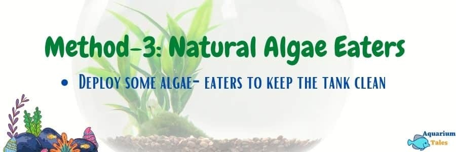 Method-3 Add Natural Algae Eaters