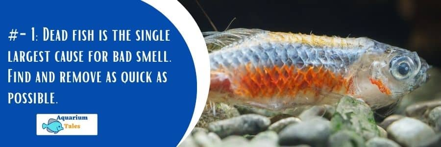 Dead Fish is primary reason for bad smell