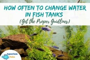 How often to Change Water in Fish Tank