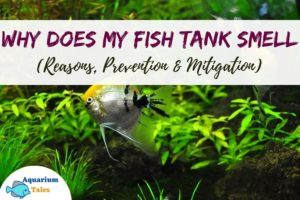 Why does my fish tank smell (Reasons, Prevention and Mitigation)