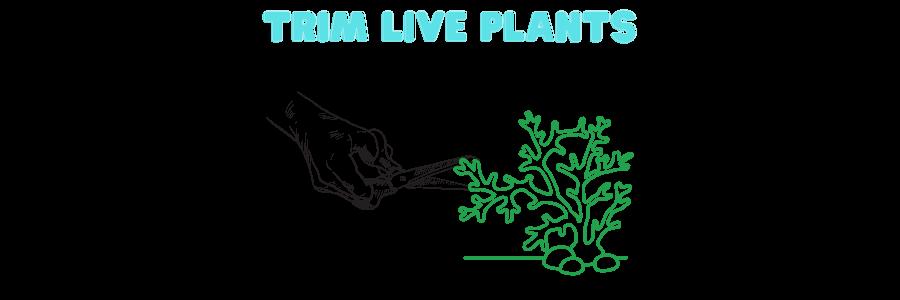 cleaning aquarium decorations - trim live plants