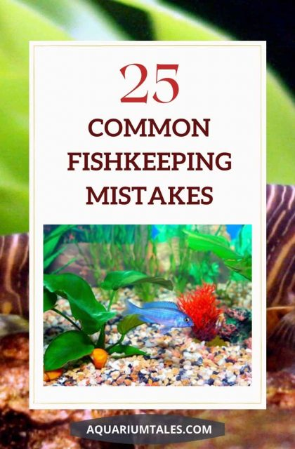 25 common fishkeeping mistakes should be avoided