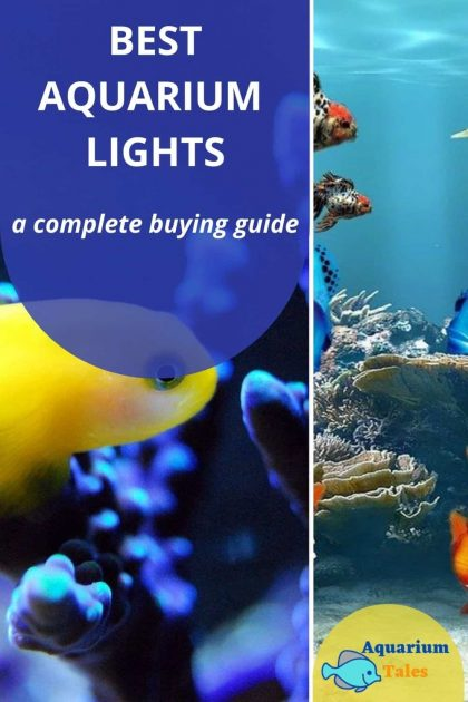 Best Aquarium Lights Review by Category
