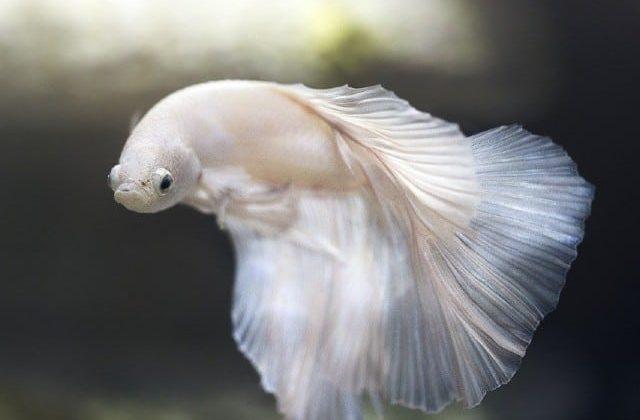 Best Betta Fish Tank review