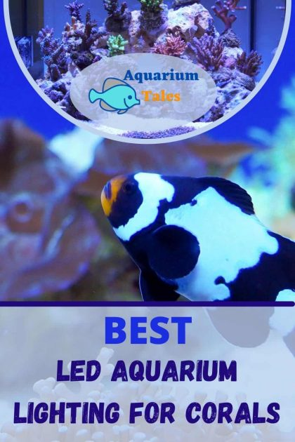 Best Led Aquarium Lighting For Corals