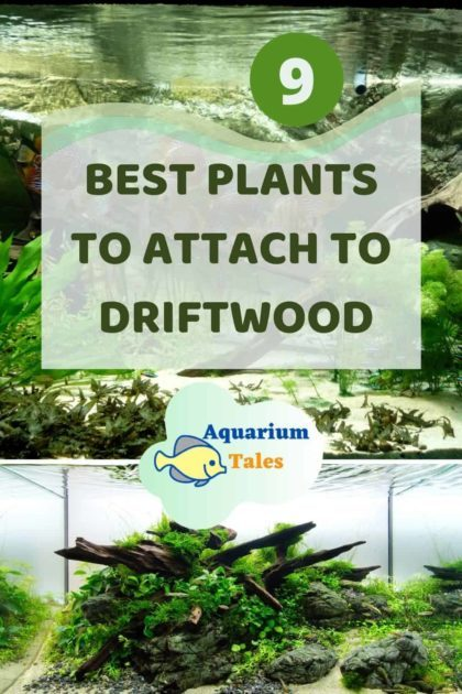 Best Plants to Attach to Driftwood
