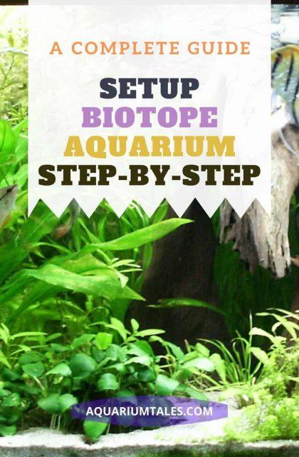 Betta Biotope Aquarium setup