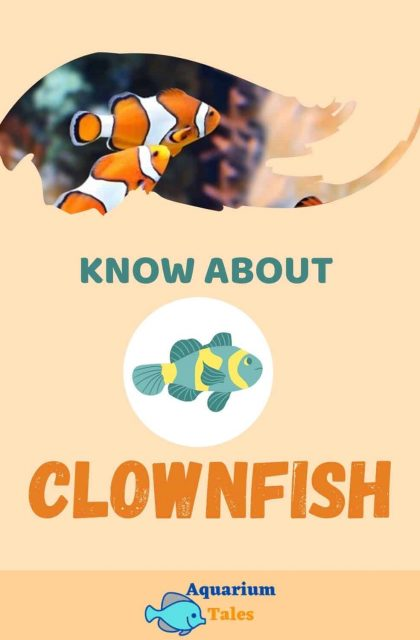 Clownfish care guide complete article