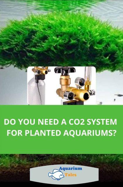 Do you need a co2 system for a planted aquarium