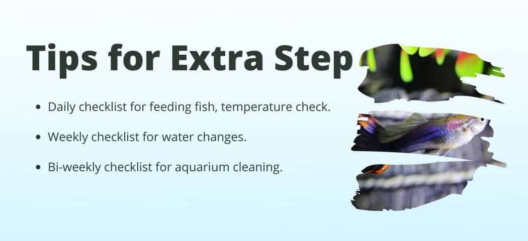 Extra tips on how to Start a fish tank