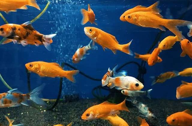 Fish Die After Changing Water