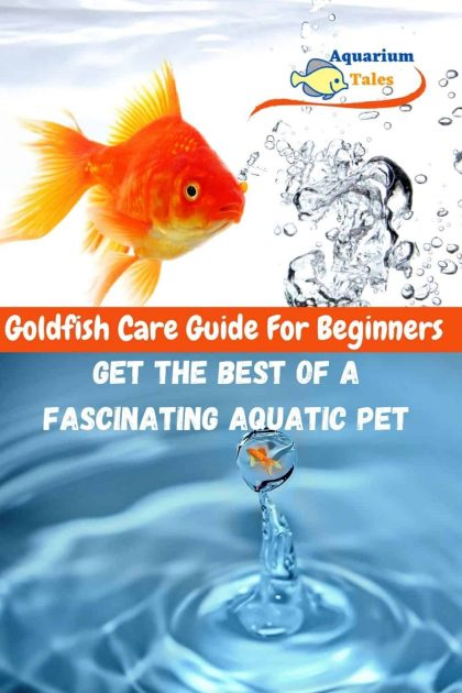Goldfish Care Guide For Beginners - Get The Best Of A Fascinating Aquatic Pet