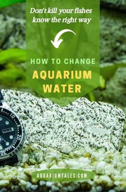 How to Change Fish Tank Water Without Killing Fish