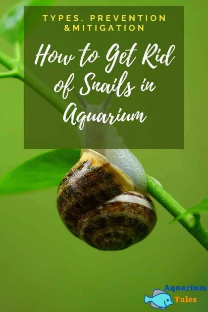 How to Get Rid of Snails in Aquariums (Types, Prevention and Mitigation)