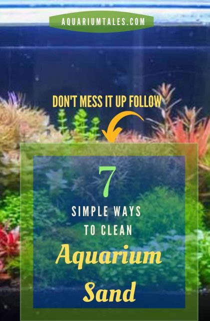 How to clean aquarium sand - know the right way