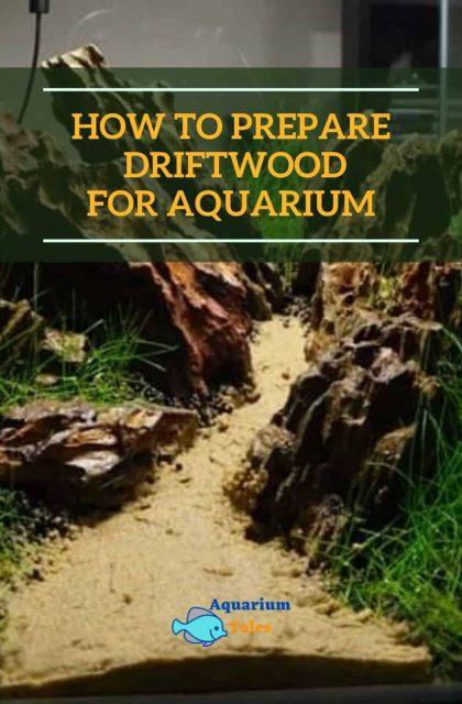 How to prepare driftwood for aquarium