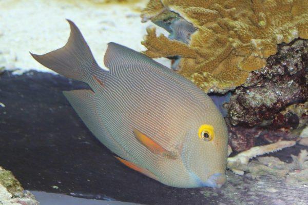 Kole Tang Aquarium Tales