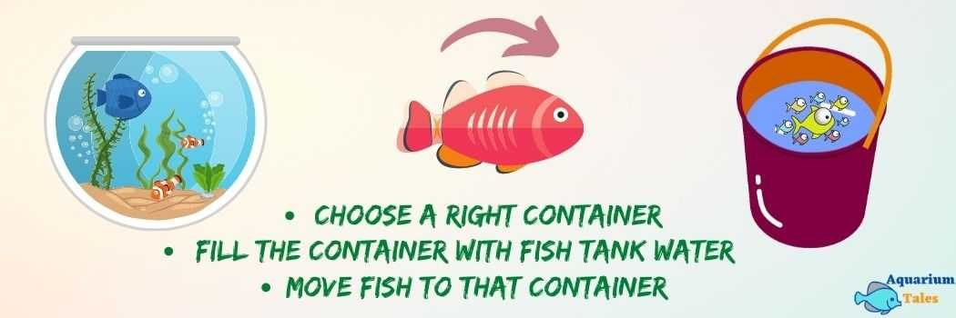 Move Fish to A Container