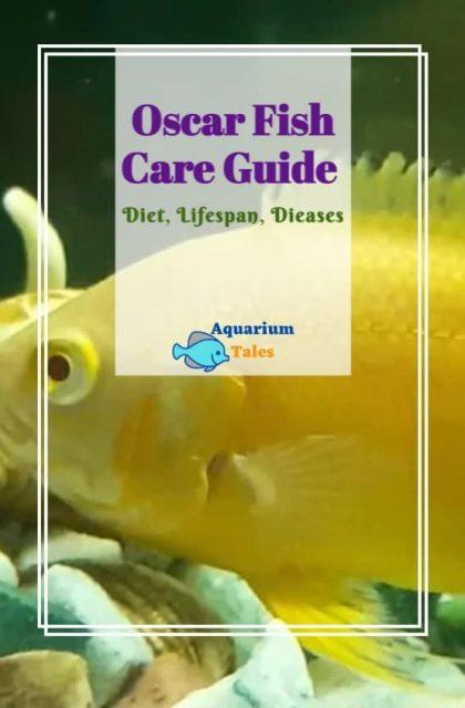 Oscar fish Care Guide-Diet -Lifespan-Diseases