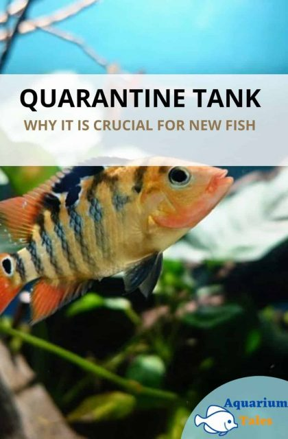 Quarantine Tank crucial for new fish