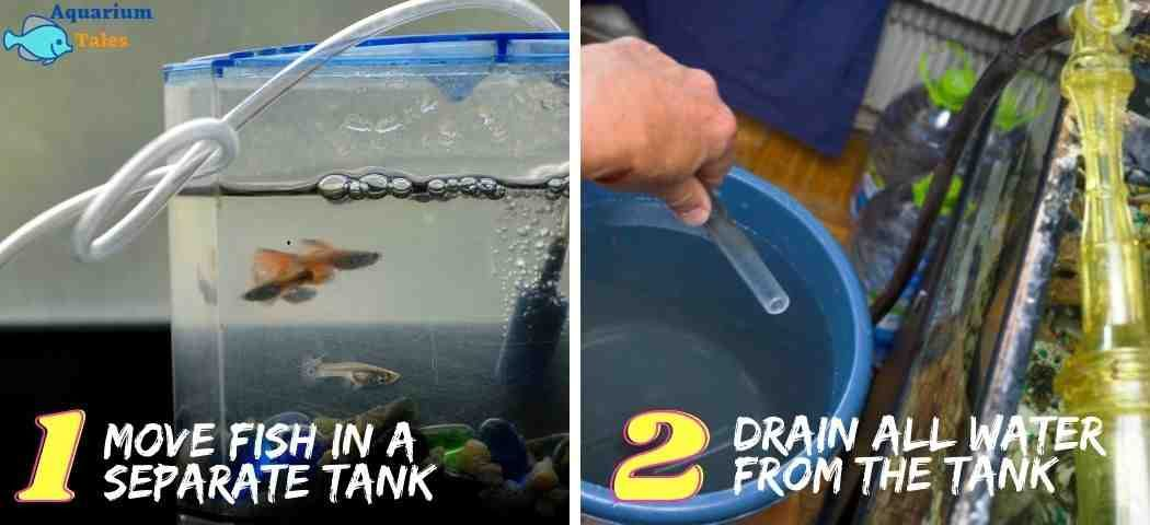 Step1&2- Move fish in a separate tank and drain all water from the tank