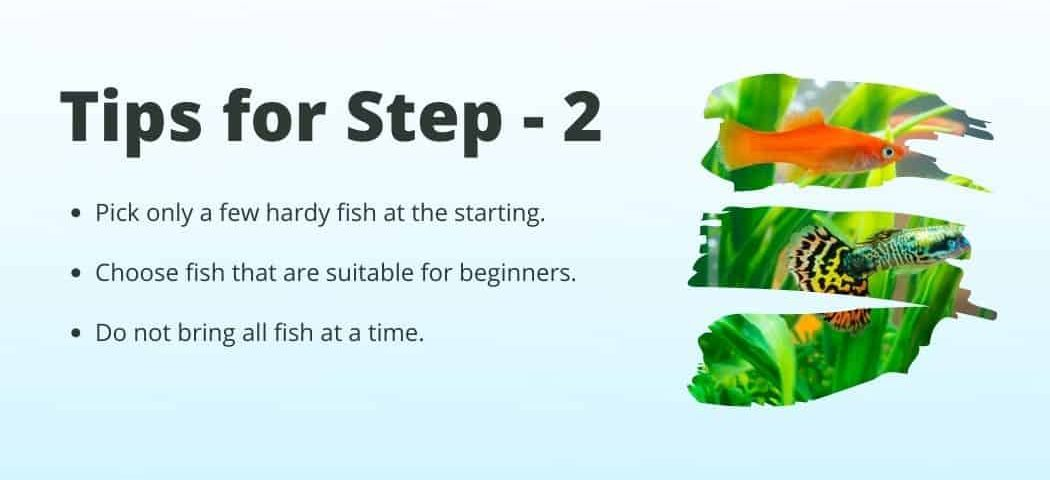 Tips no 2 on how to Start a fish tank