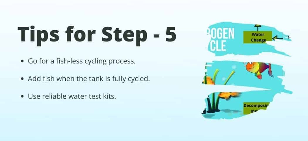 Tips no 5 on how to Start a fish tank