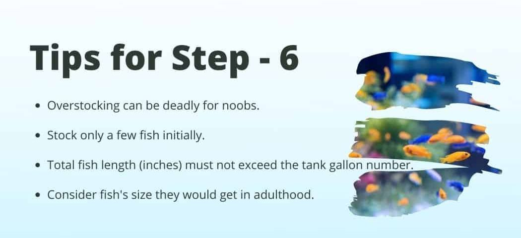 Tips no 6 on how to Start a fish tank