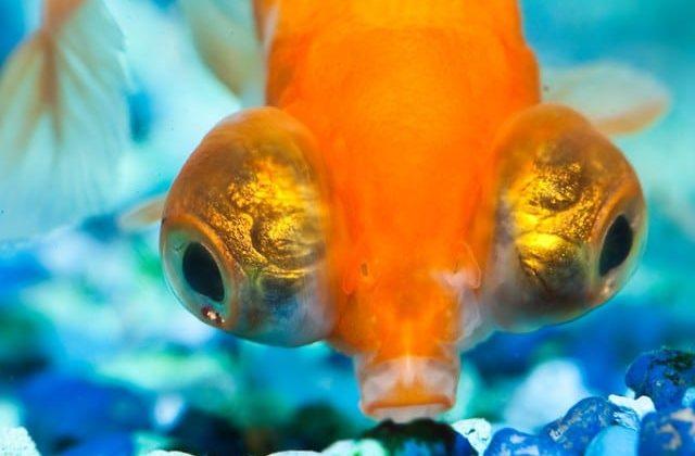 best bottom feeder fish