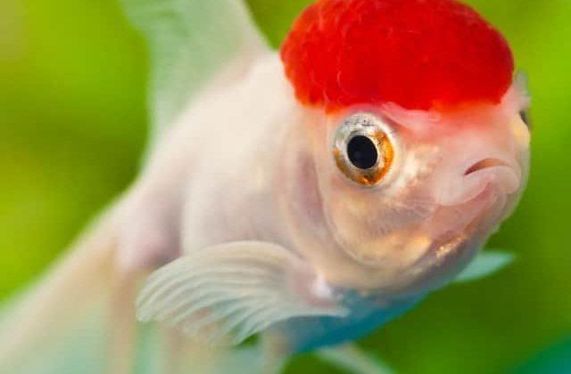best fish for 10 gallon tank