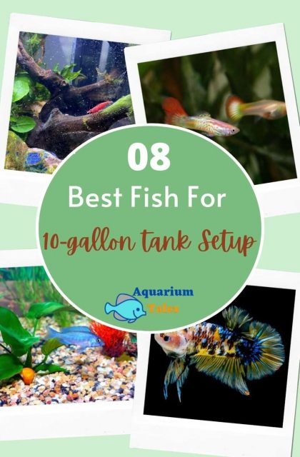 best fish for 10 gallon tank set up