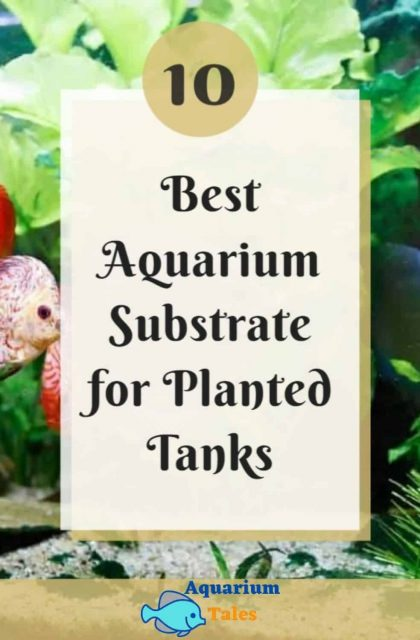 best substrate for planted tank review