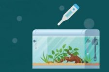 cleaning aquarium substrate step-4