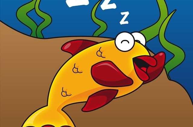 fish tank problems