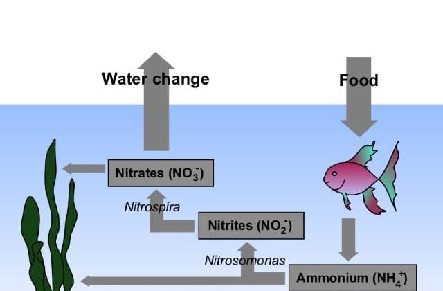 how to lower nitrate in freshwater aquarium featured