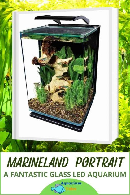 marineland portrait glass led fish tank aquarium